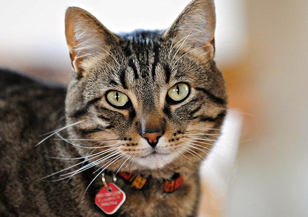 100691619-what-is-cat-fostering-632x475